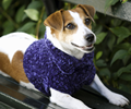 Doggie sweater book